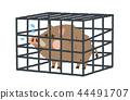 野豬捕獲 44491707