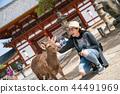 a female photographer touching the cute deer 44491969