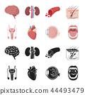 器官 图标 一组 44493479