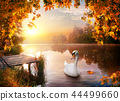 Swan on autumn river 44499660