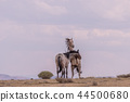 Wild horses Fighting in the Desert 44500680