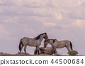 Wild horses Fighting in the Desert 44500684