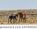 Wild horses Fighting in the Desert 44500694
