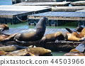 San Francisco Fisherman's Wharf's seal 44503966