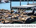 San Francisco Fisherman's Wharf's seal 44504024