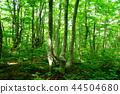 너도밤나무 숲, 습지, 습원 44504680