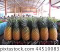 斐濟市場菠蘿旅遊 44510083