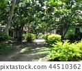 斐濟旅遊觀點的Viseisei村莊Pan樹 44510362