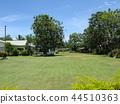 斐濟旅遊觀點的Viseisei村莊Pan樹 44510363