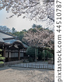 Cherry blossoms of Tokyo Yasukuni Shrine 44510787