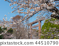Cherry blossoms of Tokyo Yasukuni Shrine 44510790