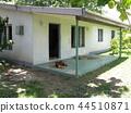 斐濟旅遊Biisei村景觀狗在樹蔭下小睡 44510871