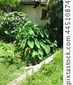 斐濟旅遊景觀Tideimo Taroimo村 44510874