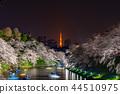 도쿄 벚꽃 만개의 치도리가 후치 44510975