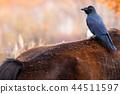 一隻烏鴉騎在馬背上 44511597