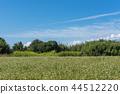 푸른 하늘과 메밀 밭 44512220