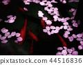 물에 떠있는 벚꽃 44516836