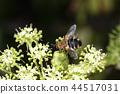 곤충, 벌레, 클로즈업 44517031