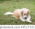 lonesome lonely sad white cute fat long hair puppy 44517141