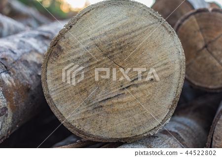 原木木材的橫截面年輪 44522802
