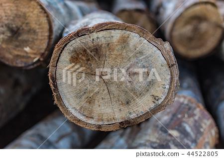 樹木年輪 44522805