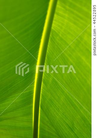 바나나 나무의 녹색 잎 44522895