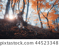 Magical old tree with sun rays. Forest in fog 44523348
