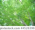 ต้นไม้ป่า 44526396