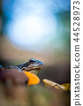 The common frog 44528973