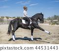 horse, girl, woman 44531443