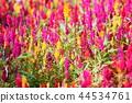 식물, 꽃, 플라워 44534761