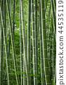 풍경 사진 센다이 야초 원의 죽림 칠석 장식 녹색에서 대나무 잎의 소리 밖에 죽림의 바람 죽림 44535119