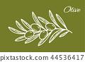olive vector logo 44536417