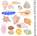 Shells vector marine seashell and ocean cockle-shell underwater illustration set of shellfish and 44542381