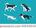dog malamute border 44542619