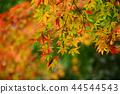 Autumn leaves 44544543