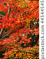 Autumn leaves 44544545