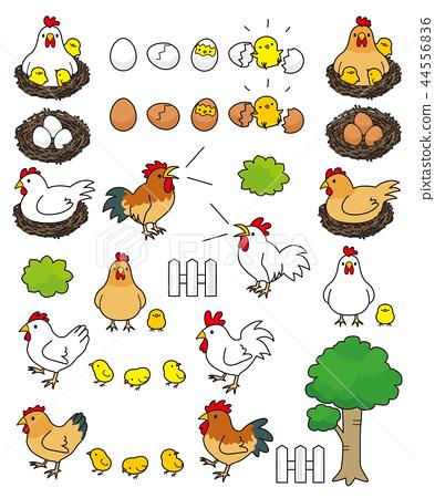 Chicken 44556836