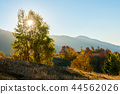 tree, landscape, forest 44562026