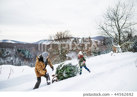 Grandfather and small girl getting a Christmas tree in forest. 44562692