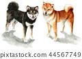 布朗和黑色Shiba Inu由水彩绘 44567749