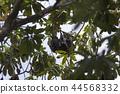 小笠原蝙蝠在冬天分組睡覺 44568332