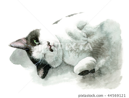 Black and white cat painted by watercolor 44569121