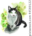 Black and white cat painted by watercolor 44569122