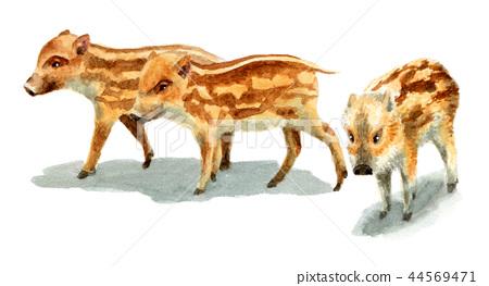 수채화로 그린 멧돼지의 아이 / 瓜坊 44569471