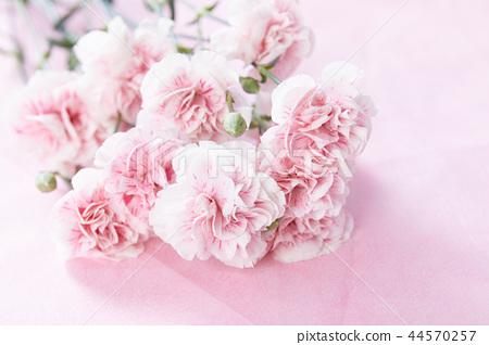 桃紅色康乃馨花束 44570257