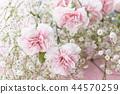 桃紅色康乃馨花束 44570259