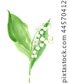 lily of the 44570412