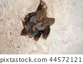 bat is mammal  and live in the cave 44572121