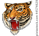hand drawn tiger isolated on white background 44574629